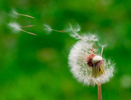 La distancia entre el registro interno y el discurso engañado
